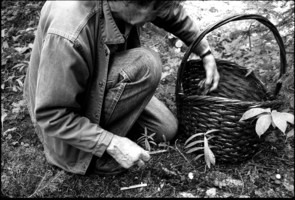John Cage picking mushrooms